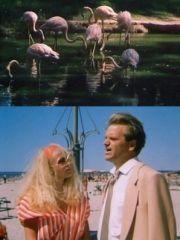Фламинго приносит счастье – эротические сцены
